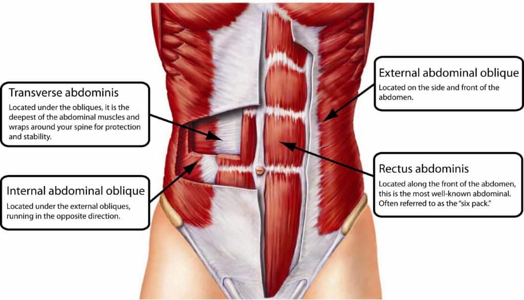 abdominal muscle diagram